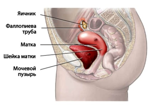 маструбация и яичники женские