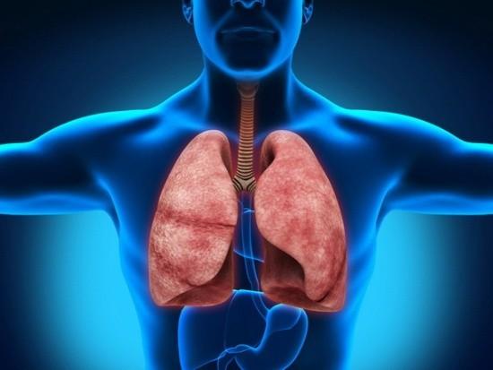 Органы воздушного дыхания