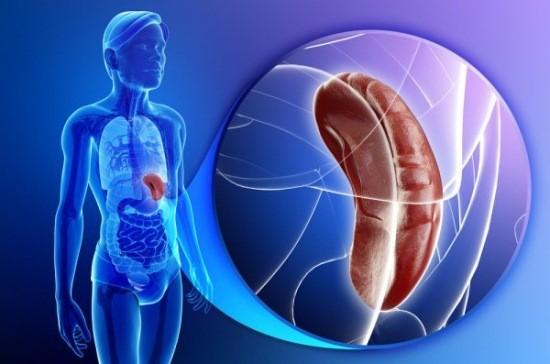 Паренхиматозный орган брюшной полости