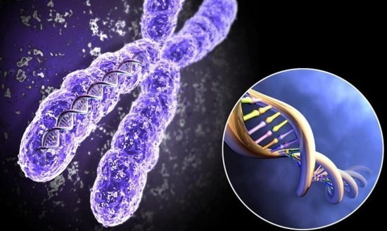 Скрининг позволяет заподозрить хромосомные аномалии у плода