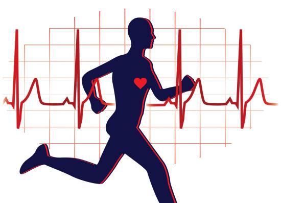 Электрокардиограмма у спортсменов имеет свои особенности