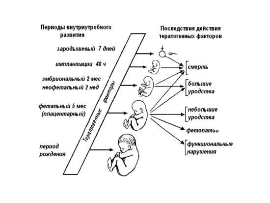 Влияния тератогенных факторов на плод