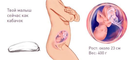 Примерный вес и рост плода на 23 неделе беременности