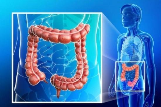 Толстый кишечник человека