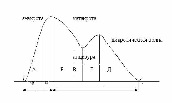 Пример реоэнцефалограммы